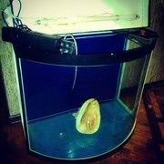 Продается аквариум цилиндрической формы