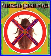Дезостанция«ВИКТОРИЯ»,  уничтожение древесного жука (короеда) в Алматы и области.