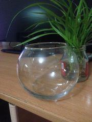 Обмен аквариума на сумочку рыбки петрушок!