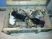 Друзья! Помогите обрести дом щенкам!