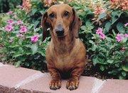 Ищет дом супер собака