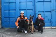 Дрессировка собак в Алматы.Профессинальный кинолог  стаж 30 лет.