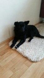 Молодая очень ласковая и добрая собачка-зовут Ксюня.