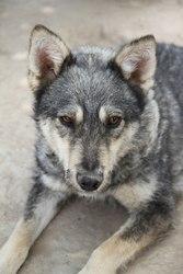 Волк или чудо Люси.