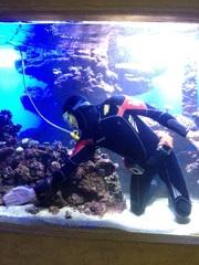 Обслуживание аквариумов морских и пресноводных в алматы