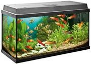 Изготовление и ремонт аквариумов