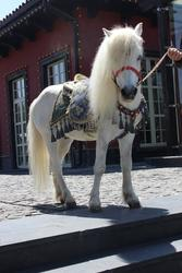 Сундет той,  белый конь