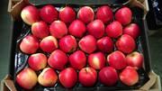 Польские яблоки и груши оптом