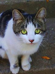 Очаровательная юная кошечка ищет хозяина -друга