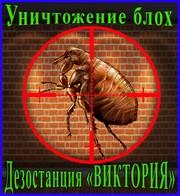 Как избавиться от блох в Алматы услуги - Уничтожение блох