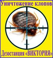 Как избавиться от клопов в Алматы услуги - Уничтожение клопов