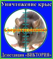 Как избавиться от крыс - услуги уничтожение крыс в Алматы