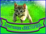 уничтожение грызунов (дератизация),  насекомых (дезинсекция) в Алматы.