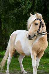 Конь продам