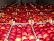 Яблоки оптовая продажа прямо со склада