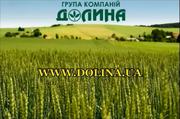 Группа компаний «Долина» ищет партнеров  на территории Казахстана