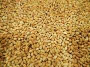 Продаем Пшеницу фуражную 3 класс